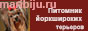 питомник йорков Екатеринбург купить щенка йорка York